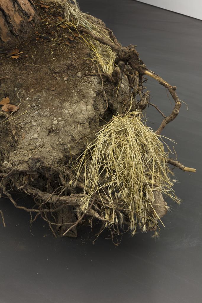 Ceppo sradicato (uprooted tree)