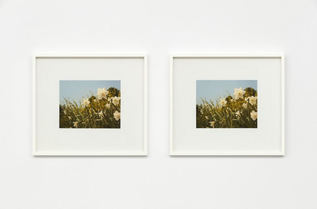 Andrew Grassie, Flowers 1, Flowers 2, 2019