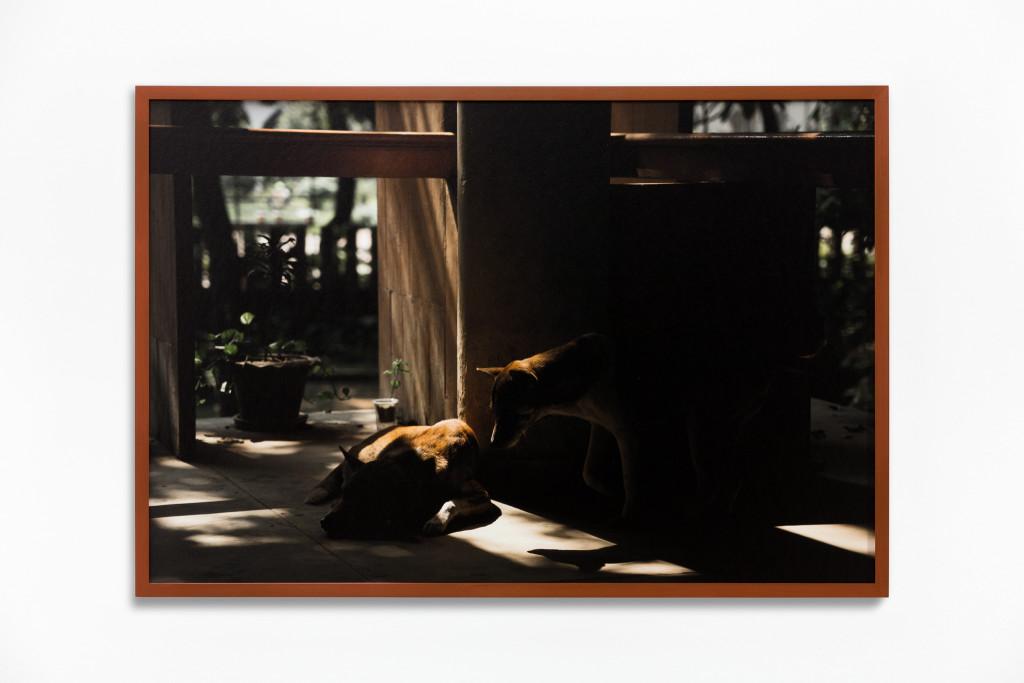 Daniel Steegmann Mangrané, Fog Dog (Couple), 2020
