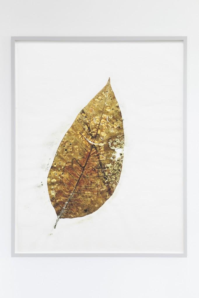 Herbarium Amazonas - Sheets (3)