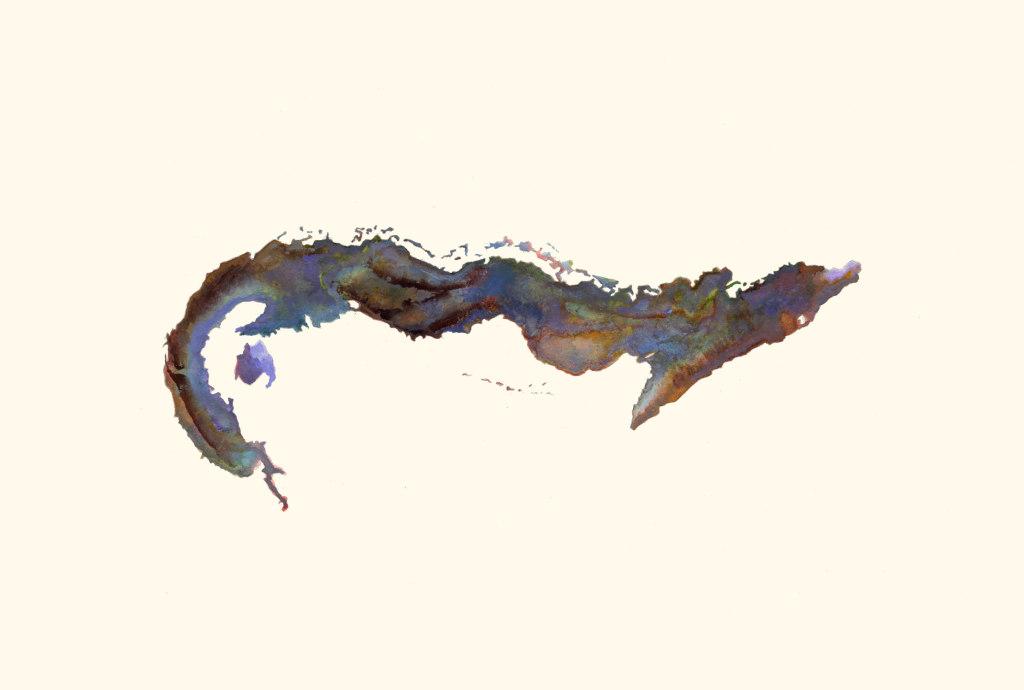 Untitled (Gymnothorax Afer/Cuba)