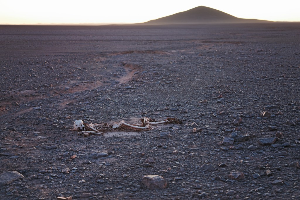 Cerro Indio Muerto