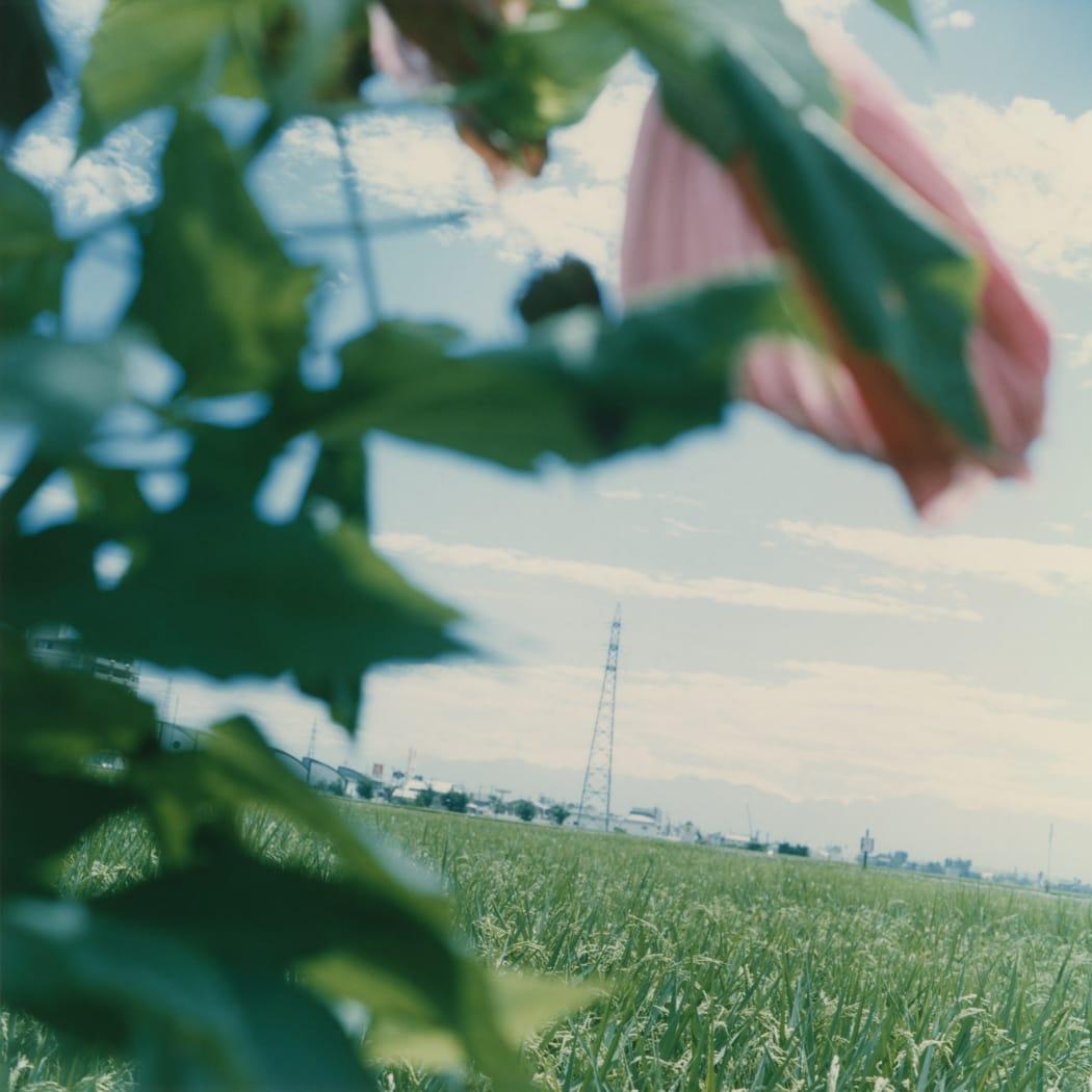 Mikiko Hara, Untitled, from the series Agnus Dei, 1998, chromogenic print