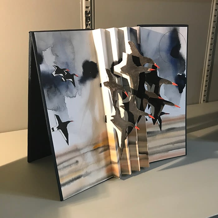 Birdflight Book by Judith Ellis