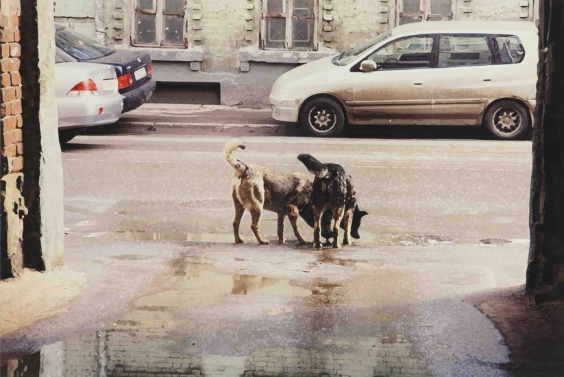 "<p>Semyon Faibisovich<br />Watering Place from the cycle «Dog's life», 2011</p><p><a href=""https://ovcharenko.art/admin/records/exhibitions/_edit/210#"" class=""void"" style=""letter-spacing: -0.1px;""> </a></p>"