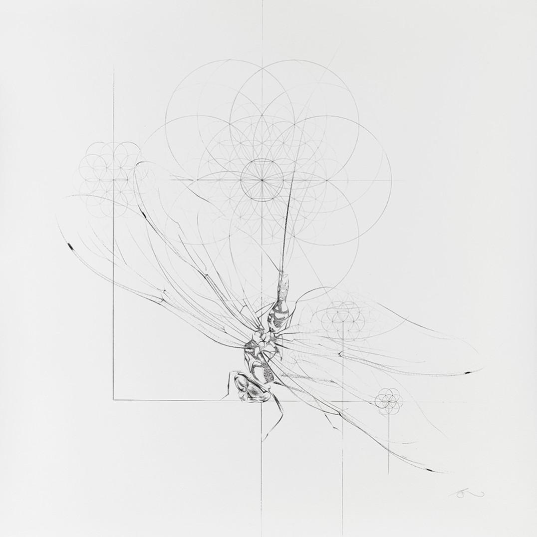 Dragon-Flower