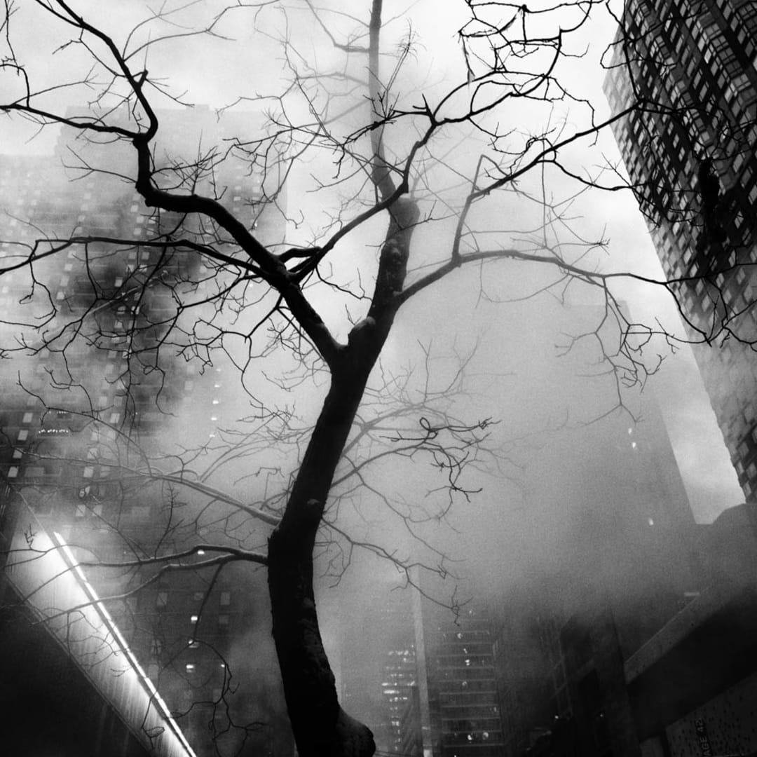 PHIL PENMAN, 42nd Street Project, Steam Tree, 2017