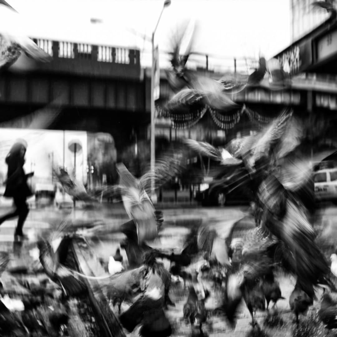 PHIL PENMAN, Sky Rats, New York, 2017