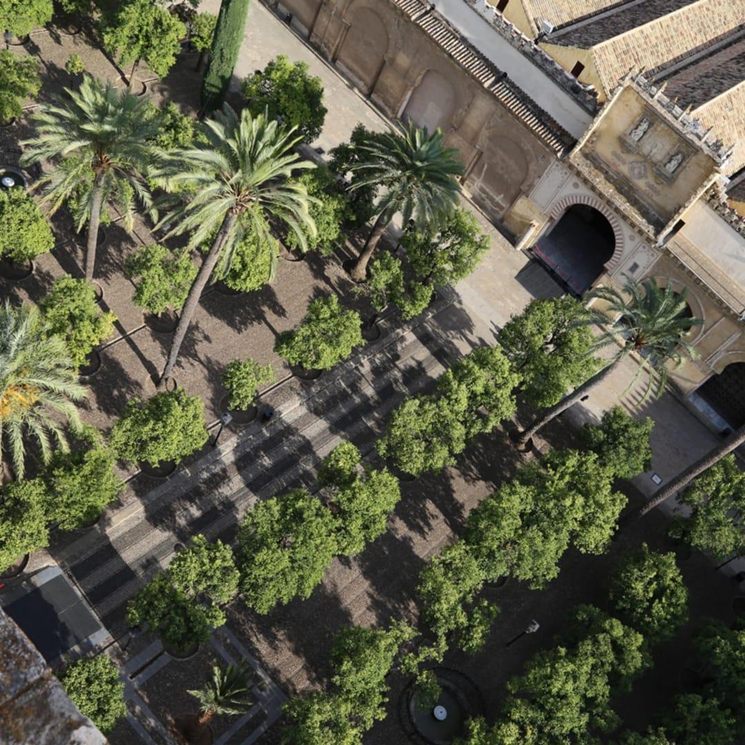 Patio de Naranjos, Cordoba Mosque Cathedral, Spain