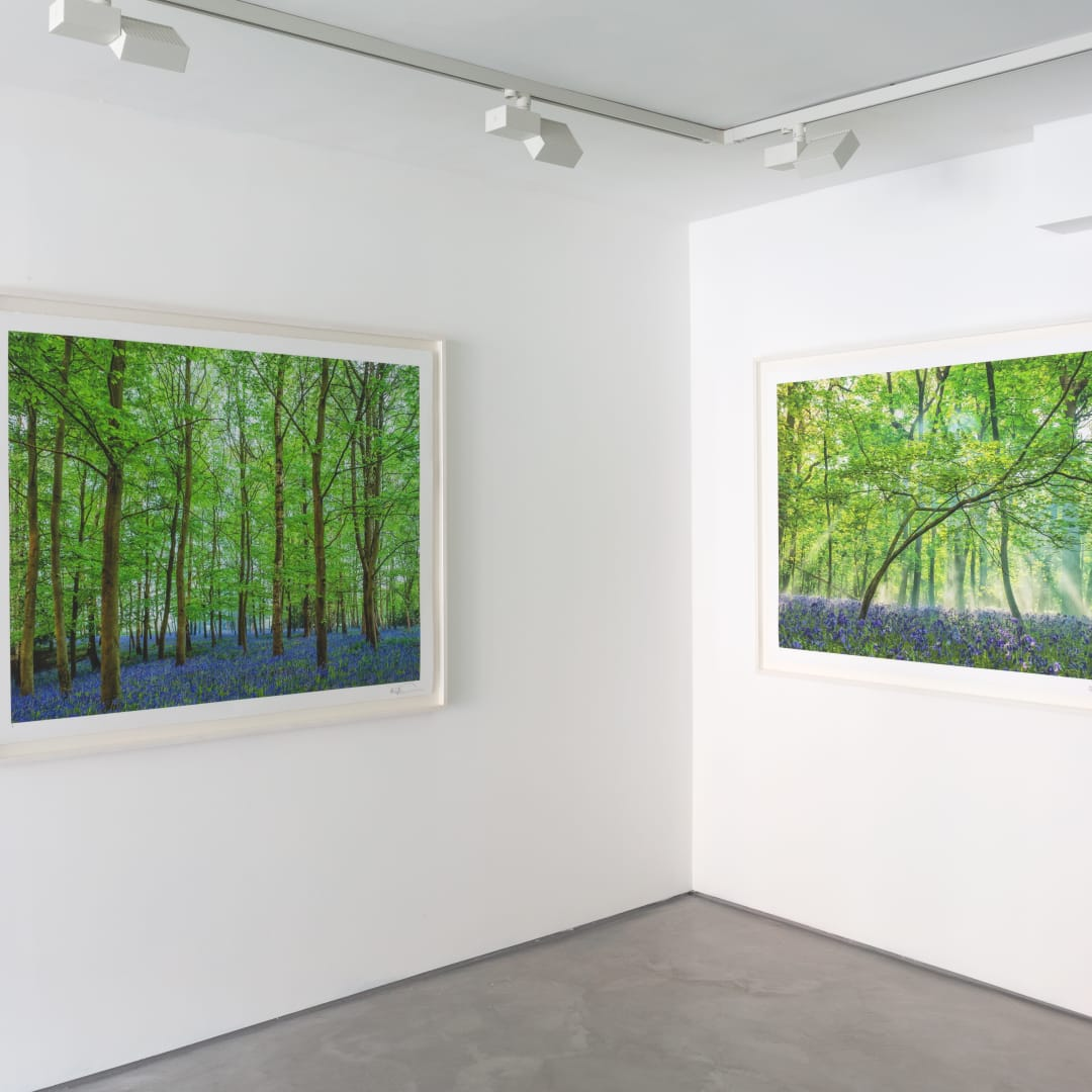 Adrian Houston, Spirit of Nature, Informality Gallery, Installation view, 2020. Image courtesy of Informality.