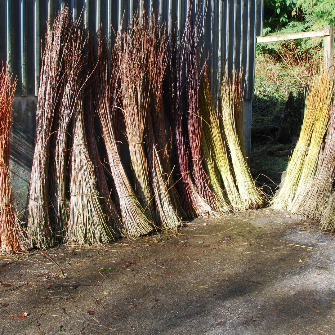 Bundles of harvested willow
