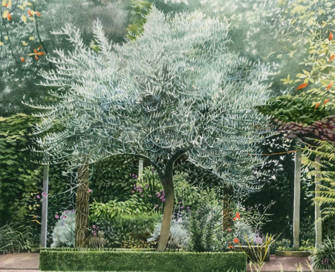 Liz Butler RWS, The Olive Tree
