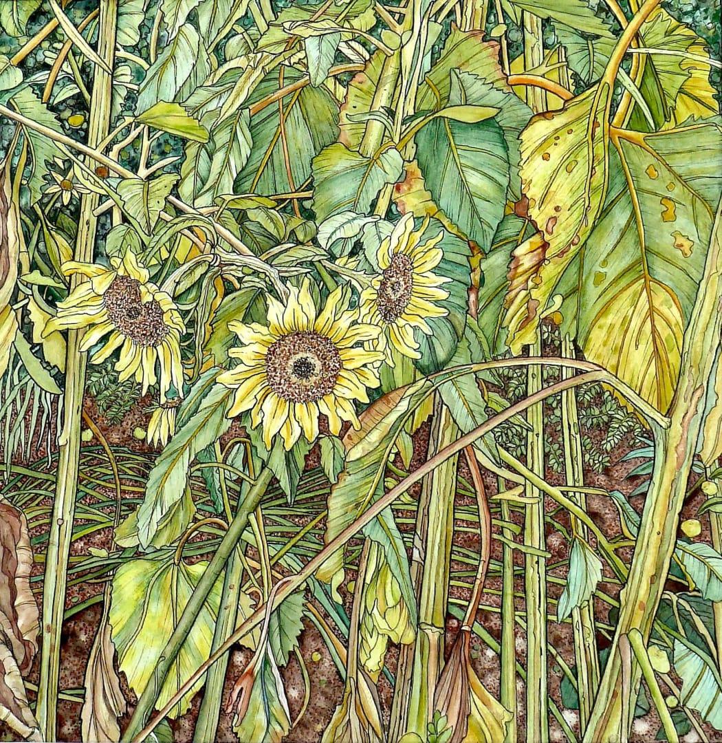Meg Dutton RE, Sunflowers