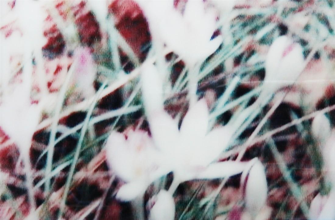 Annelies Štrba, An 2 (The Lost Garden), 1999