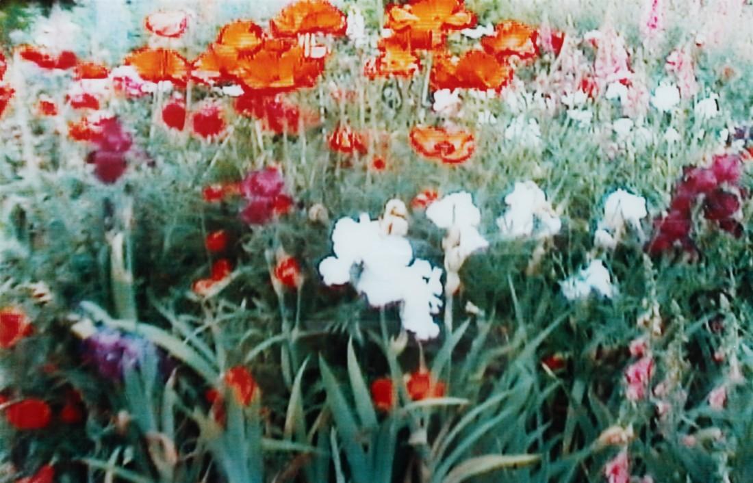 Annelies Štrba, An 5 (The Lost Garden), 1999