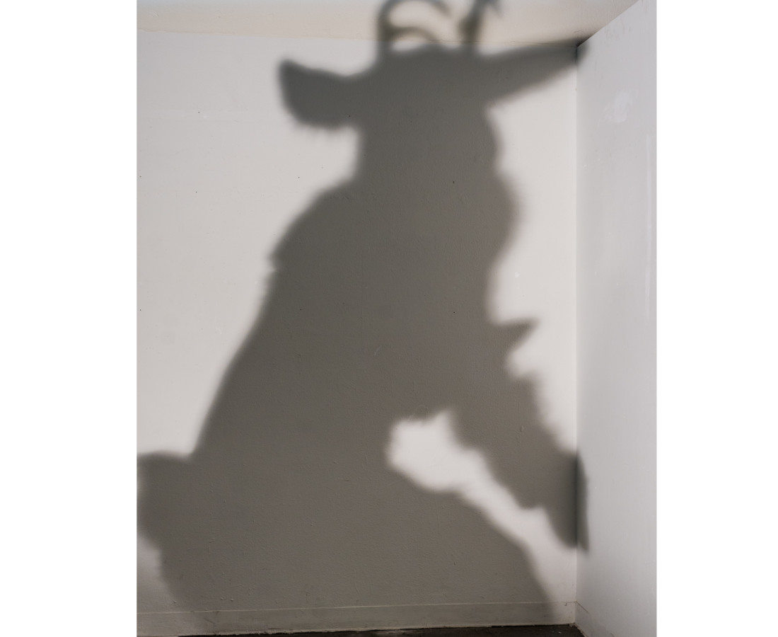 Tommy Bruce, Shadow, 2017