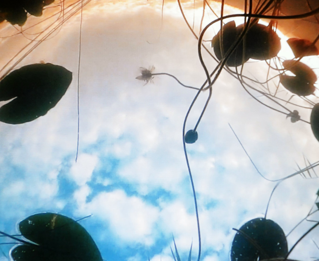 Herman Lohe, Skydiving Waterlilies, 2017