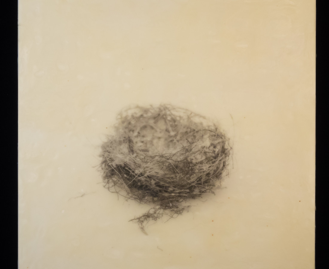 Susan Seubert, Nest 12, 2019