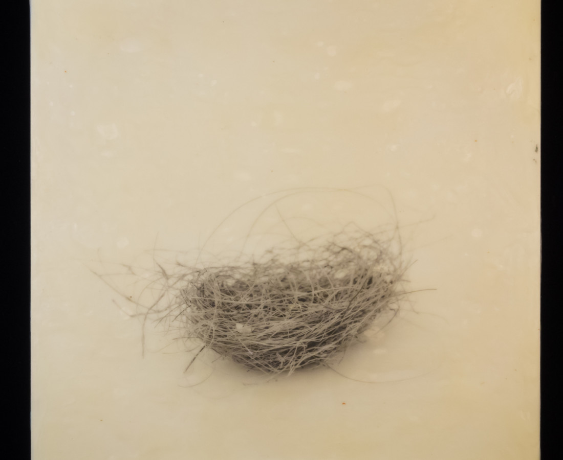 Susan Seubert, Nest 9, 2019