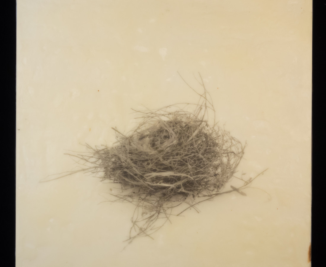 Susan Seubert, Nest 6, 2019
