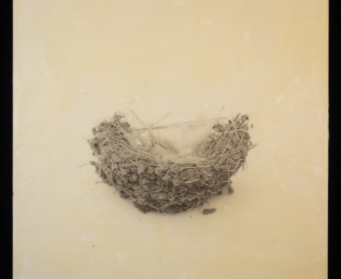 Susan Seubert, Nest 4, 2019