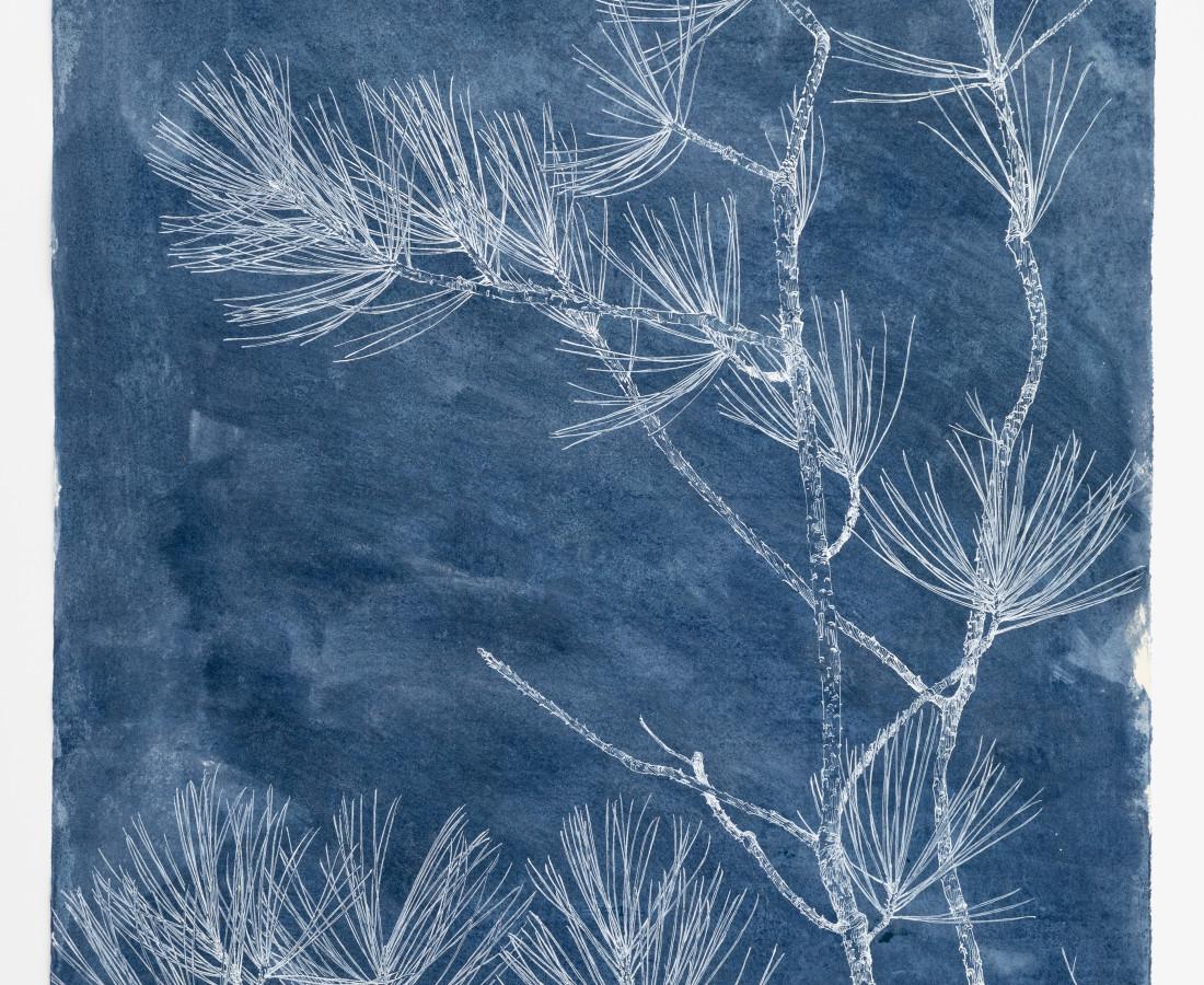 Sarah Horowitz, Pines in White, 2019