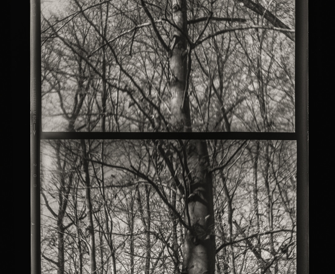 Sandy Rothberg, Stacked Tree