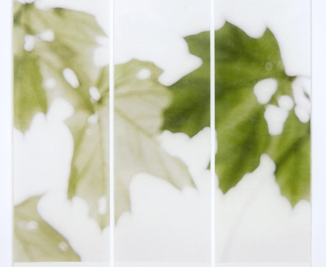 Jeri Eisenberg, Under the Norway Maple