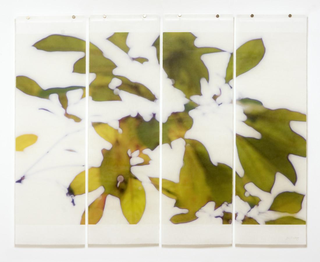Jeri Eisenberg, Canopy (Bok Gardens)