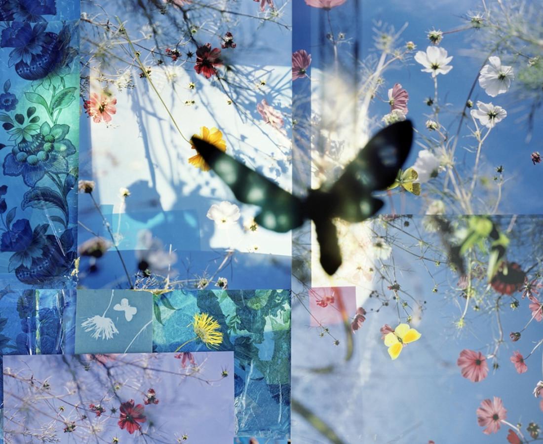 Thomas Zika, Butterflies - I saved an Admiral's life - 01, 2009/10