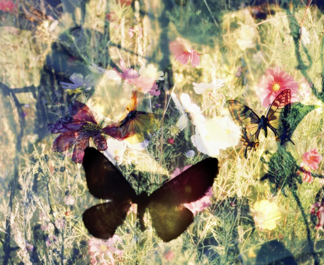 Thomas Zika, Butterflies - I saved an Admiral's life - 14, 2009/2010