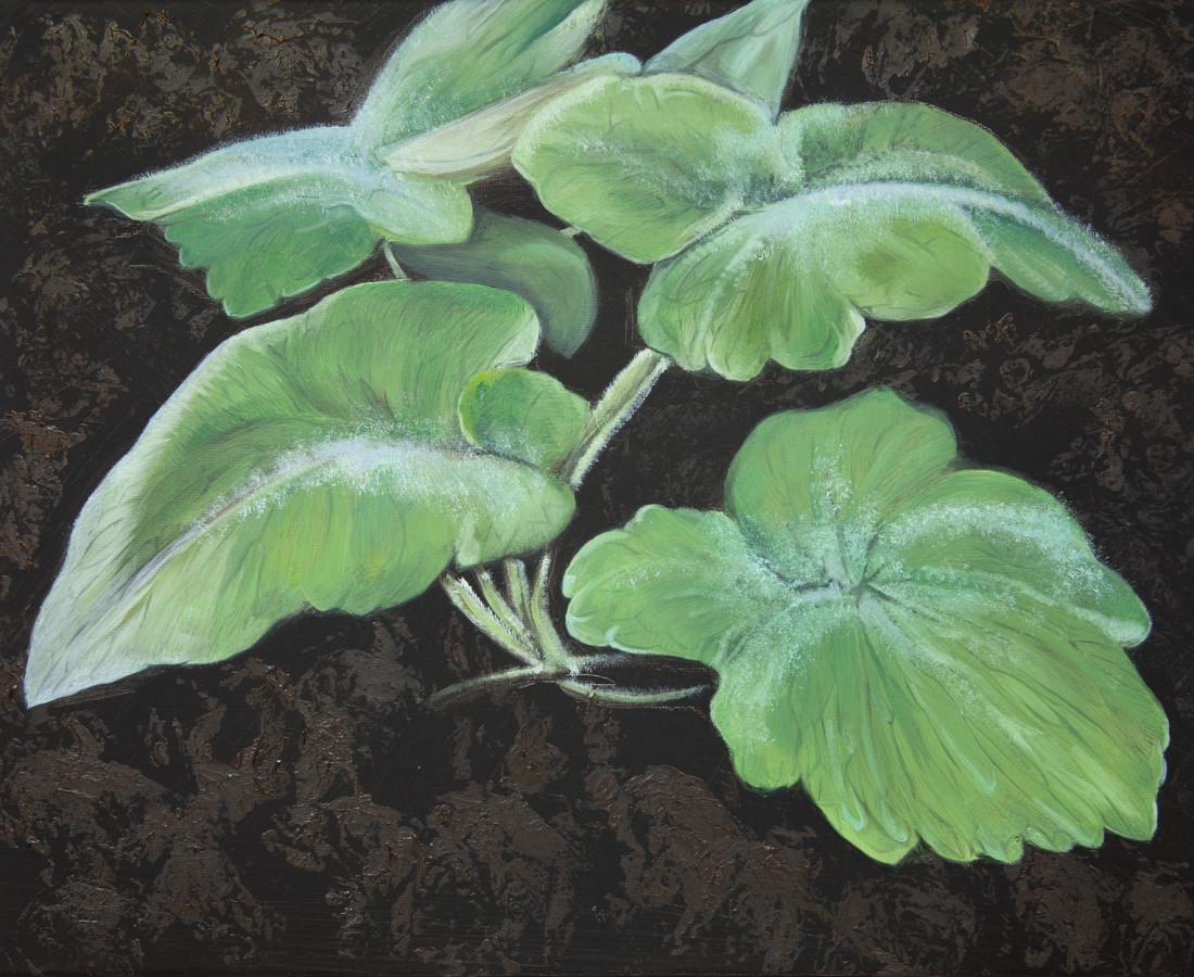 Bennie Reilly, Weed II, Botanic Gardens, Dublin, 2017