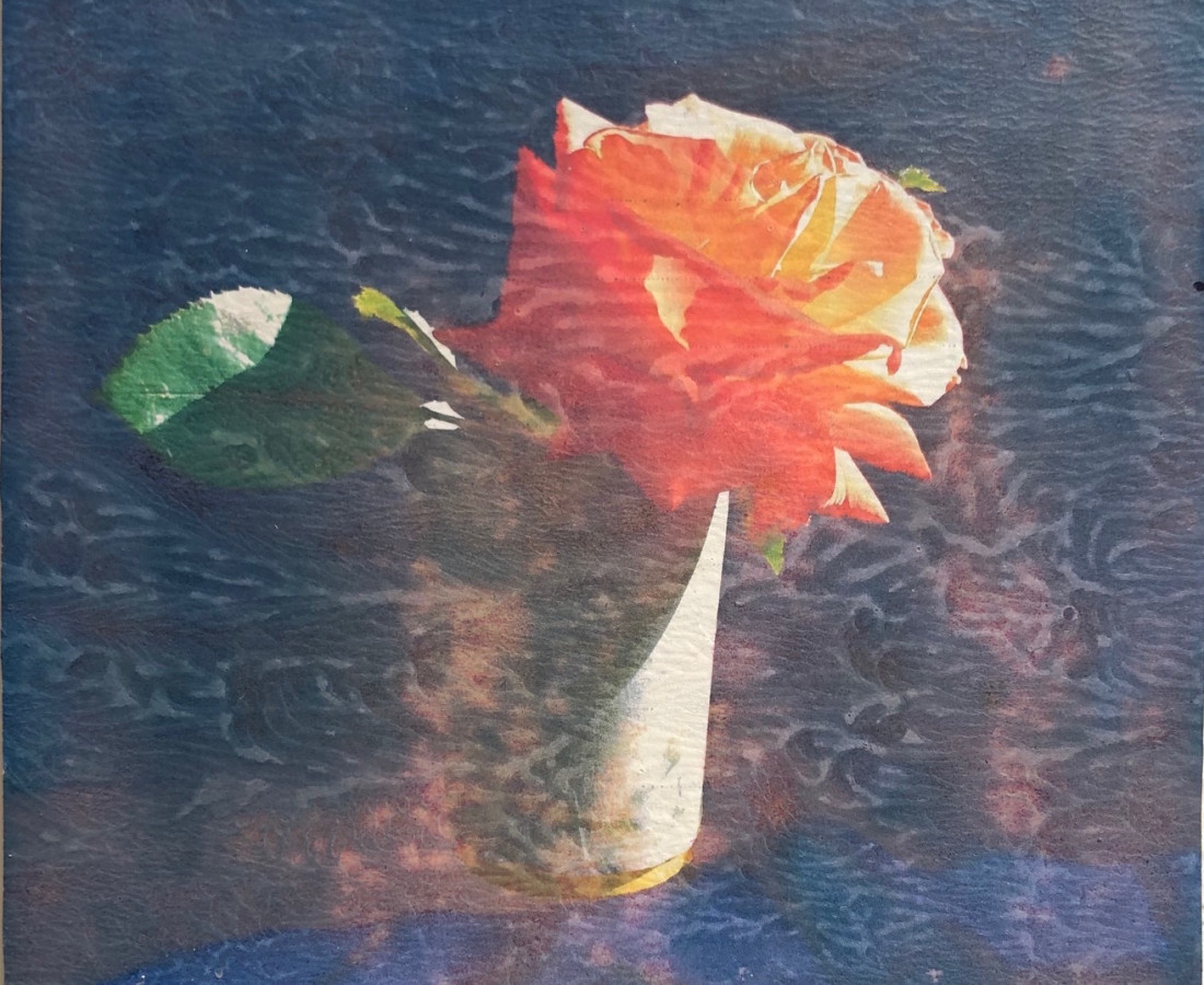 Austin Hearne, Peach Sun Rose