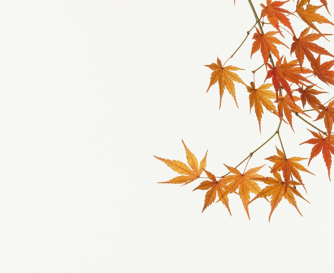 Takashi Tomo-oka, Maple , 2010
