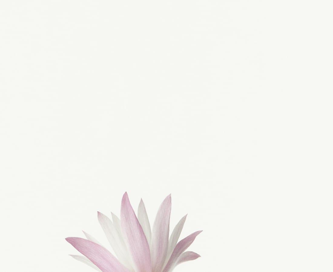Takashi Tomo-oka, Peony1, Botanichige, 2013