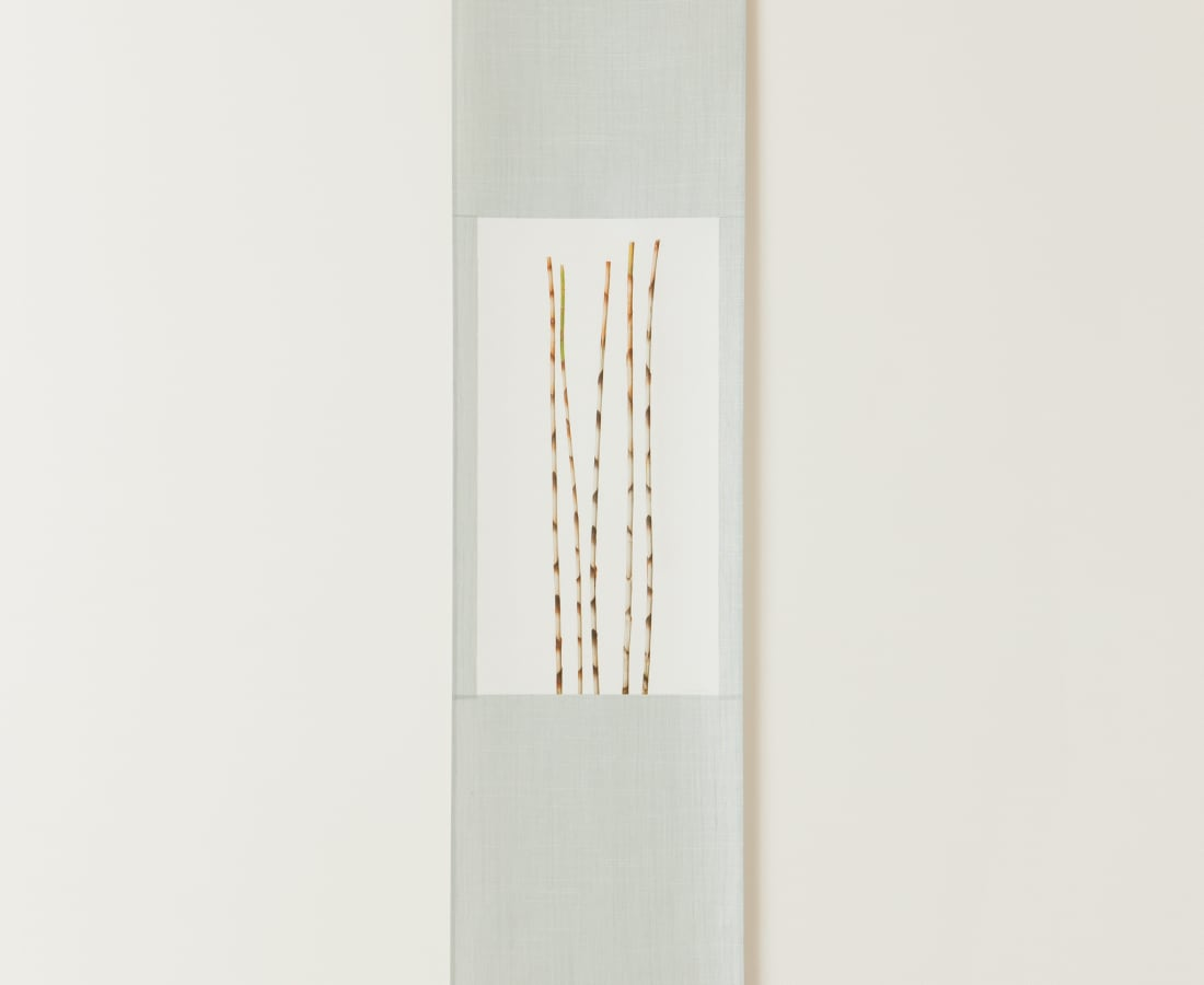 Takashi Tomo-oka, Bamboo Ginger, 2010