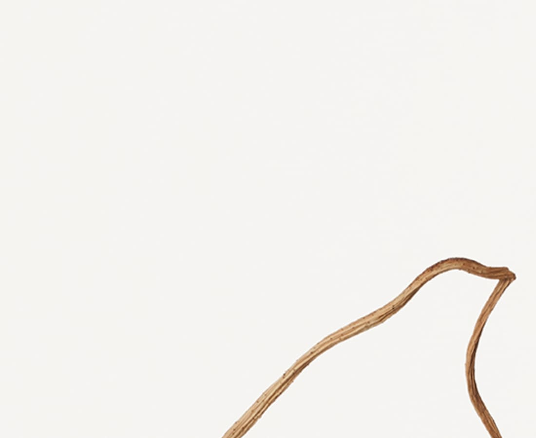 Takashi Tomo-oka, Dried Lotus 4, Karehasu, 2014