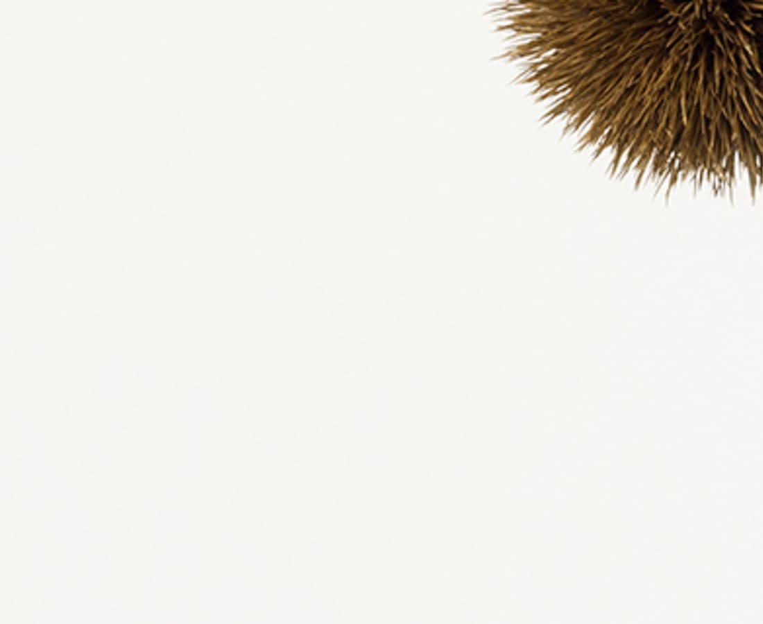 Takashi Tomo-oka, Chestnut 1, Kuri, 2014