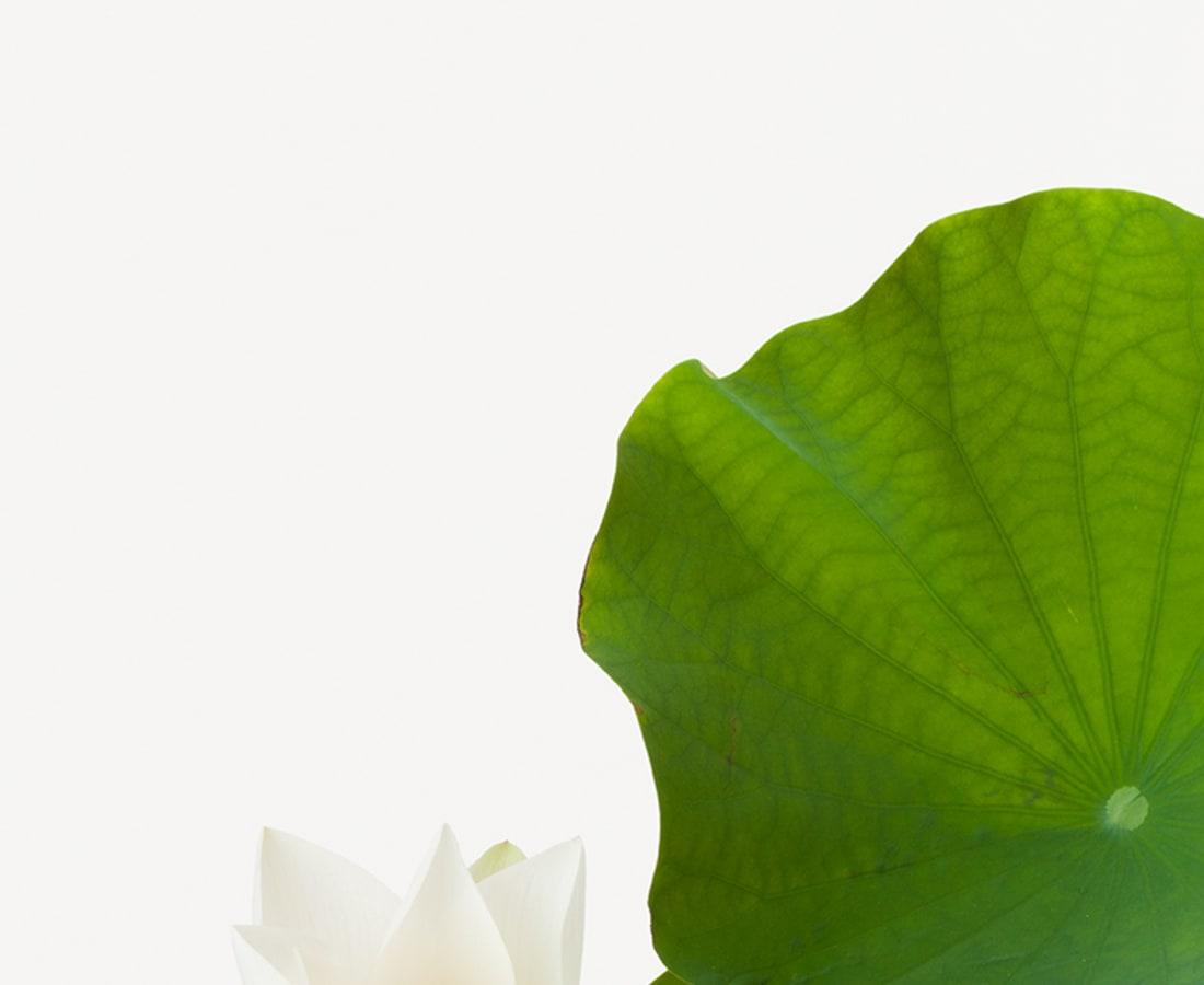 Takashi Tomo-oka, Tathata Lotus 5, Shinnyoren, 2014