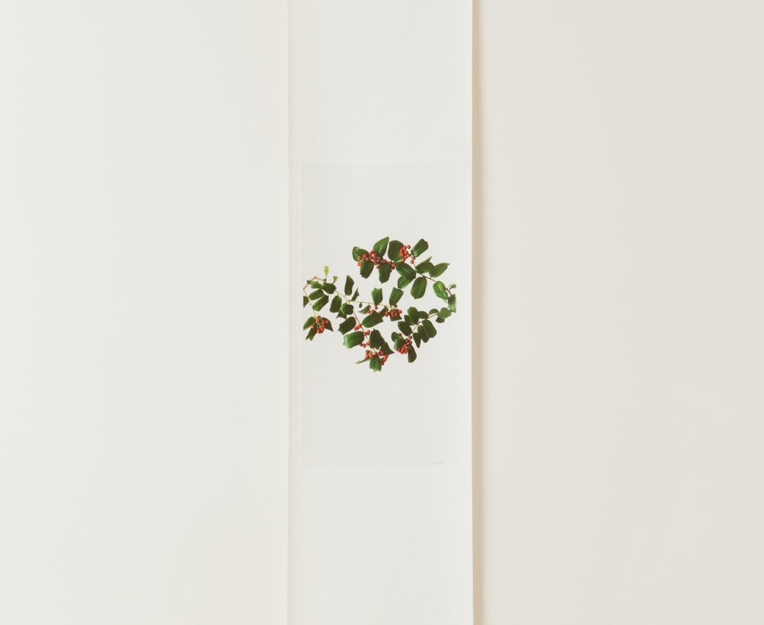 Takashi Tomo-oka, Christmas Holly , 2010