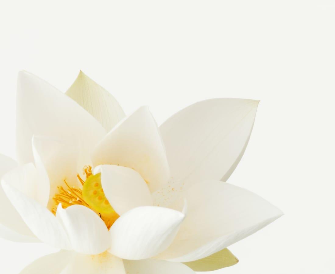 Takashi Tomo-oka, Kuwana White Lotus 3, Kuwana-Hakuren, 2017