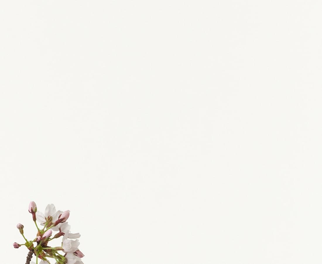 Takashi Tomo-oka, Cherry Blossom 1, Sakura, 2012