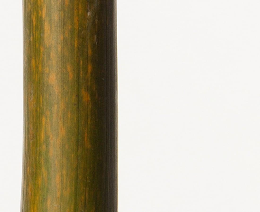 Takashi Tomo-oka, Bamboo 2, Take, 2016