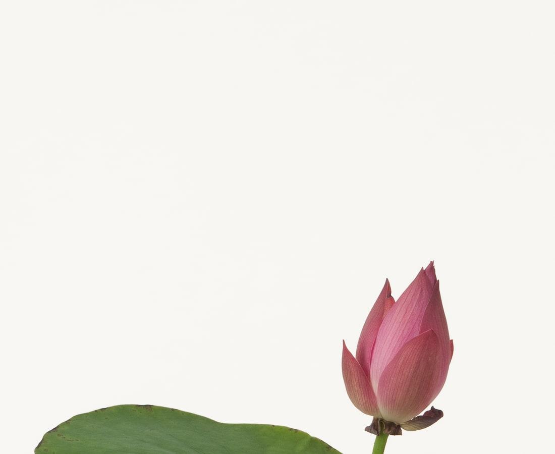 Takashi Tomo-oka, Lotus 2, Hasu, 2012