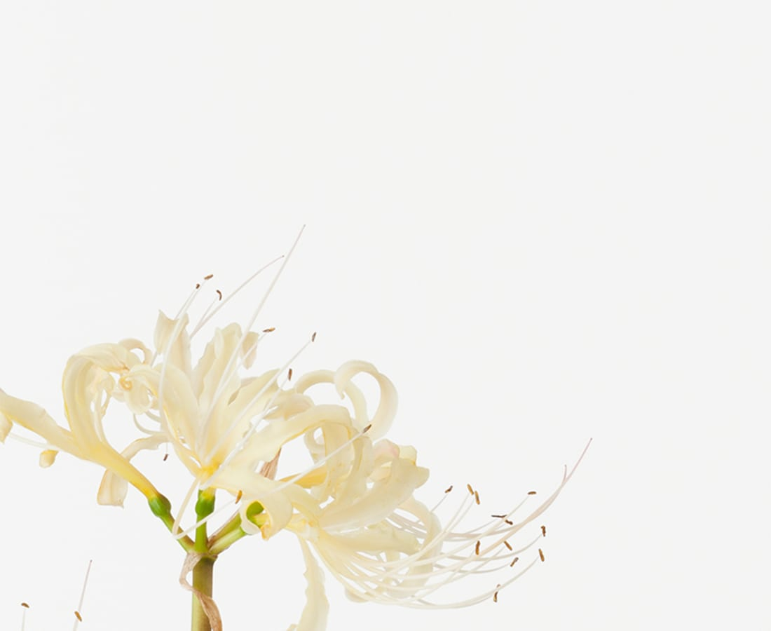 Takashi Tomo-oka, Red Spider Lily 2, Higanbana, 2015