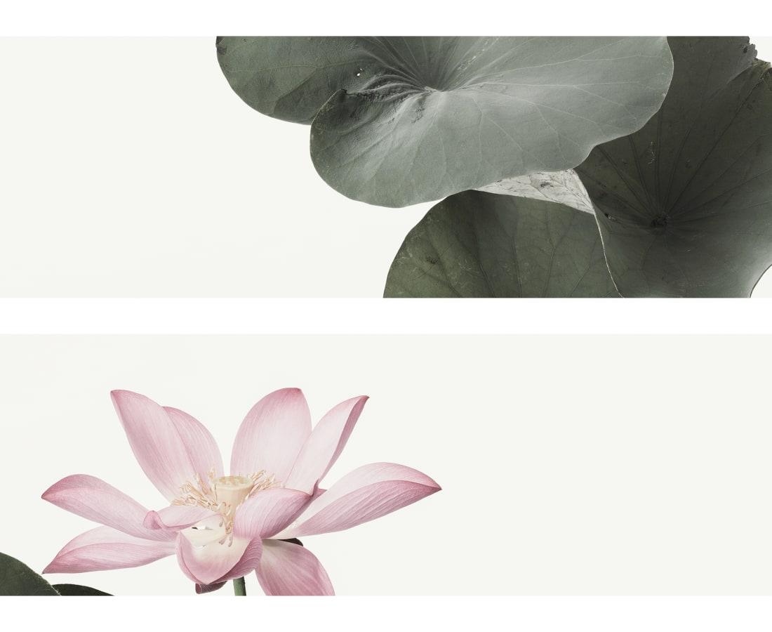 Takashi Tomo-oka, Seiryokoren 1, Seiryo-koren, 2015