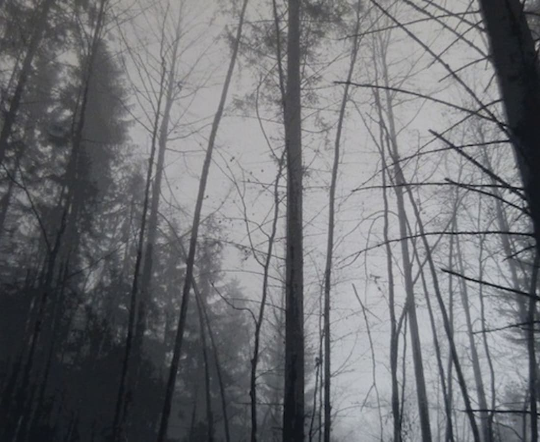 SONJA WEBER, Woodland 1745, 2018