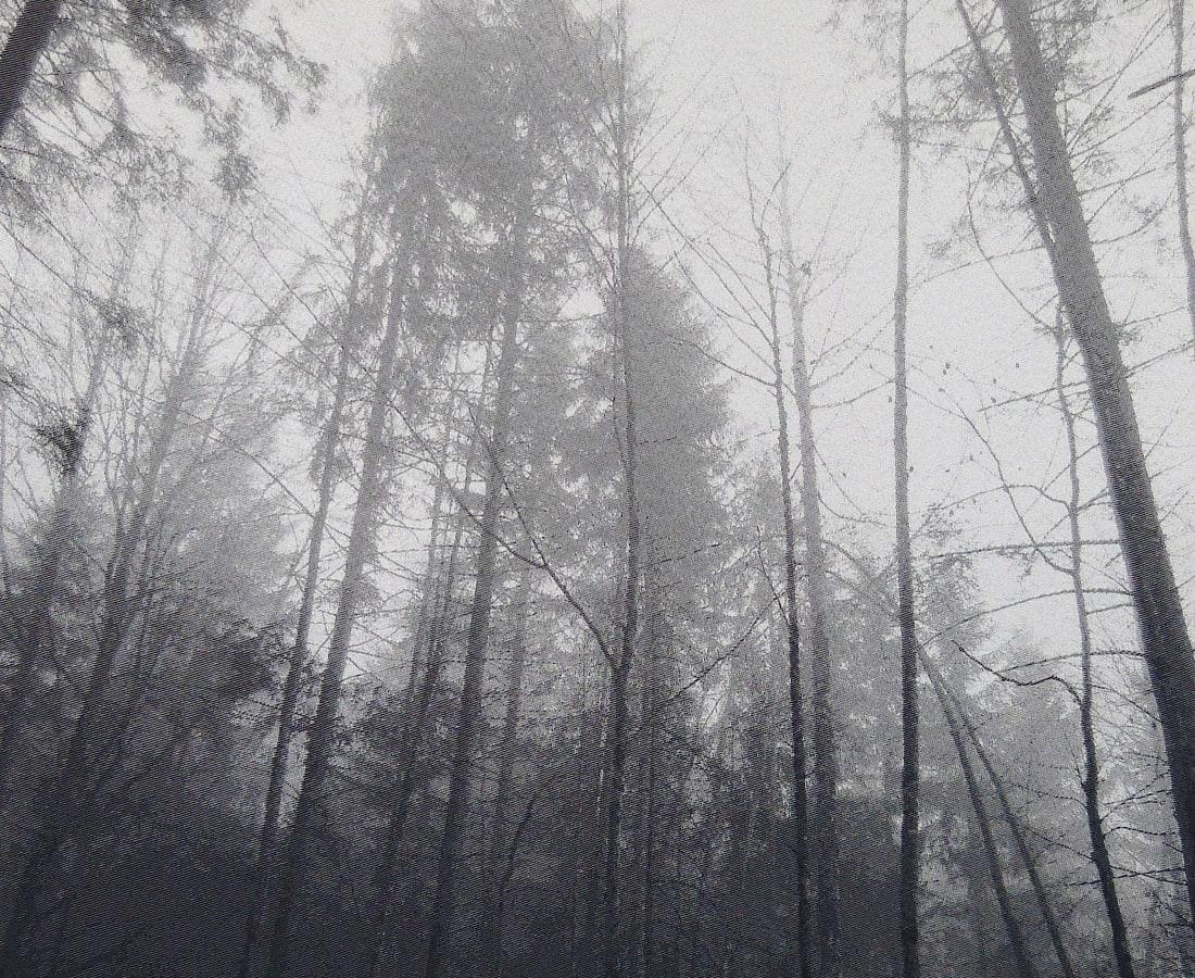 SONJA WEBER, Woodland 1744, 2018