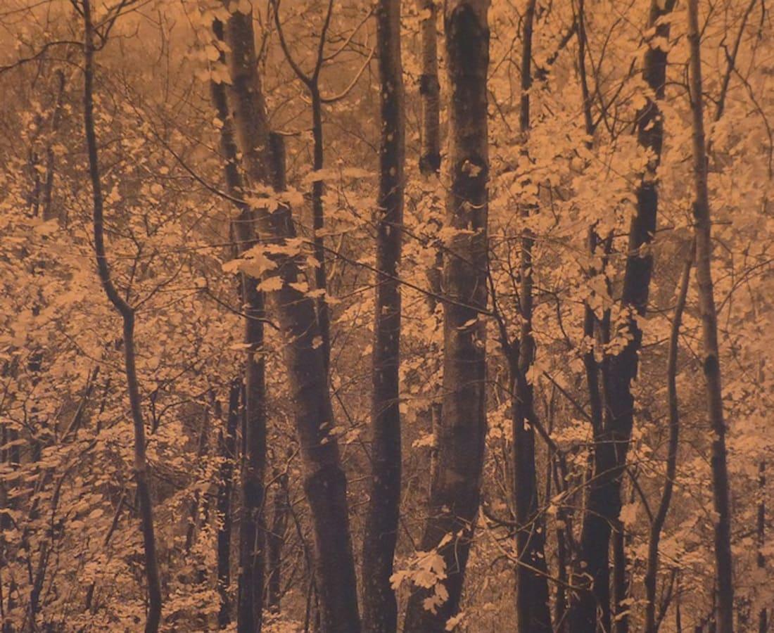 SONJA WEBER, Woodland 1806, 2019