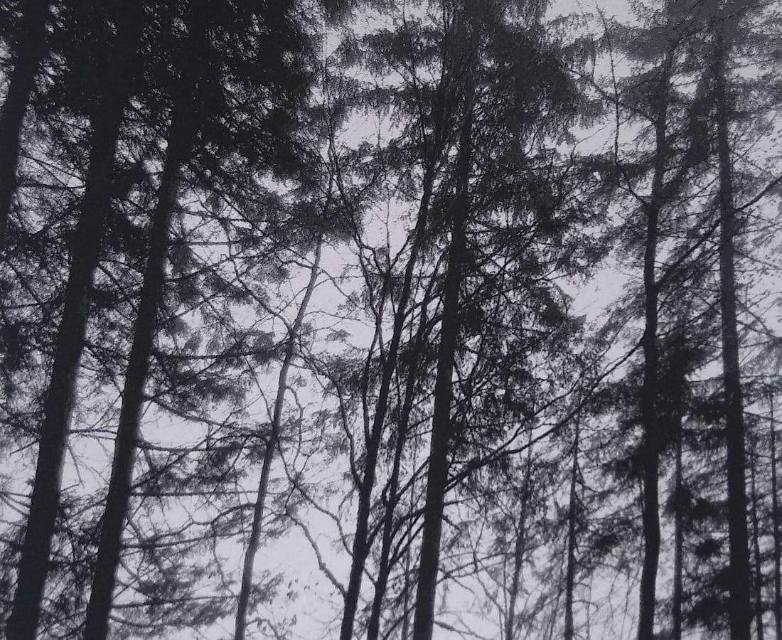 SONJA WEBER, Woodland 1772, 2019